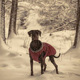 Dog in Snowy Forest by A Cappellari