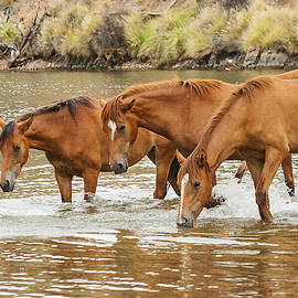 Brown Family at the river by Ruth Jolly