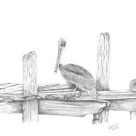 Brown Pelican by Patricia Hiltz