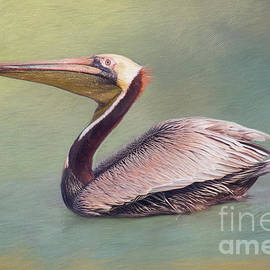 Sharon McConnell - Brown Pelican Portrait