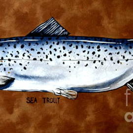 Brown Sea Trout