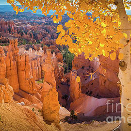 Bryce Aspen by Inge Johnsson