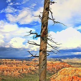 Allen Beatty - Bryce Canyon 10 - Bryce Point