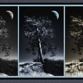 Mike Nellums - Bryce Canyon Pine Triptych