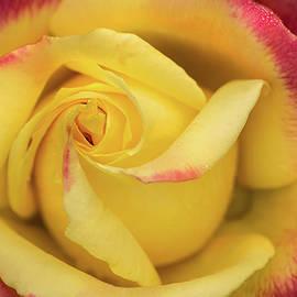 BSG Rose Macro by Don Johnson