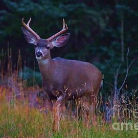 Jeff Swan - Buck deer in the woods