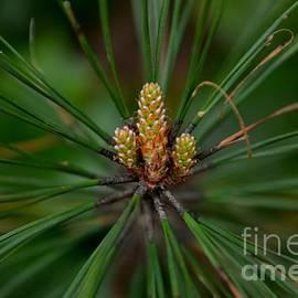 Adrian DeLeon - Budding Pine Cones for Spring -Georgia