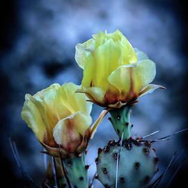 Robert Bales - Budding Prickly Pear Cactus