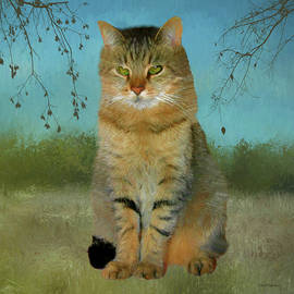 Buddy The Tabby by Ericamaxine Price