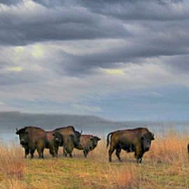 Steve Toole - Buffalo Herd