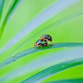 Bug Mating by Az Jackson