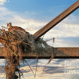 Building the Nest by Dale Powell