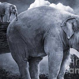 KaFra Art - Bull Elephants