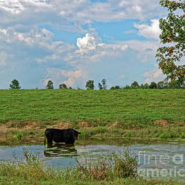 Bull In A Pond by Paul Mashburn
