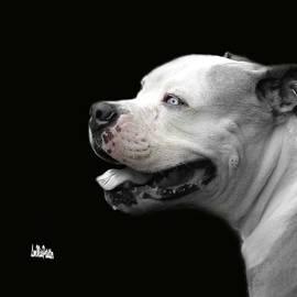 Bulldog Sando  Portrait  by Miss Pet Sitter