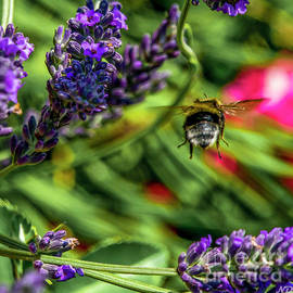 Bumble Bee On The Go by Nigel Dudson
