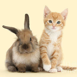 Bunny Marvelous And Purrfectly Formed by Warren Photographic