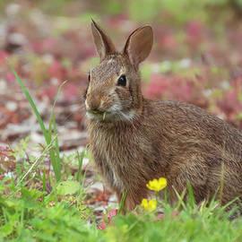 Bunny by Sandi Kroll