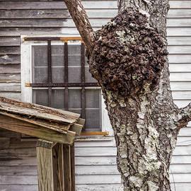 Frank Winters - Burl and Window
