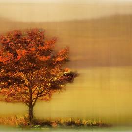 Burning Bush Dreamscape by Debra and Dave Vanderlaan