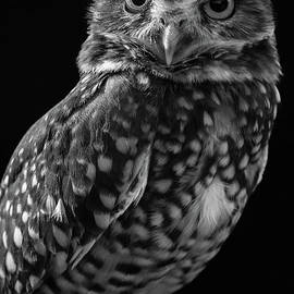Chris Scroggins - Burrowing Owl