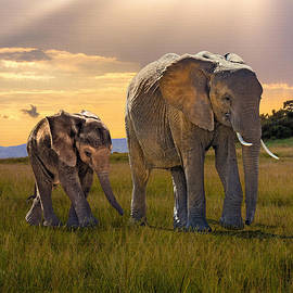 Bush Elephant Cow and Calf by M Spadecaller