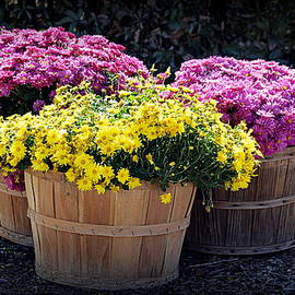 Bushels Of Fall Flowers by AJ Schibig