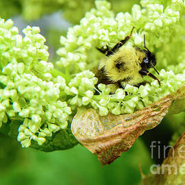 Alana Ranney - Busy Bee