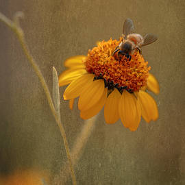 Busy Bee by Susan Rissi Tregoning