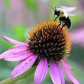 Trina Ansel - Busy Bee
