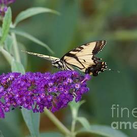 John Franke - Butterflies 3