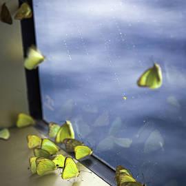 Karen Wiles - Butterflies At Sea