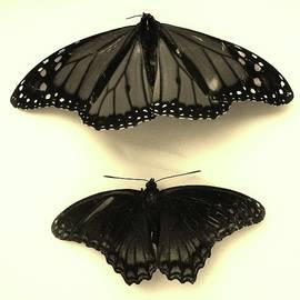 Butterflies in Monochrome