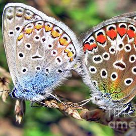 Butterflies Mating   by Daliana Pacuraru