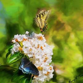 Rusty R Smith - Butterflies on Mountain Laurel flowers.