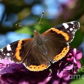Butterfly 12 by Jean Bernard Roussilhe