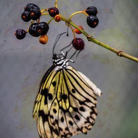 Butterfly And Berries by Robin Zygelman