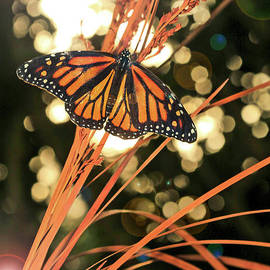 Luana K Perez - Butterfly and Fairy Lights Photo