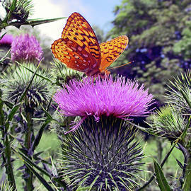 Patricia Keller - Butterfly And Thistle Flower