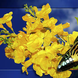 Phyllis Denton - Butterfly And Yellow Bells