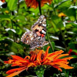 Ed Weidman - Butterfly Beauty #12
