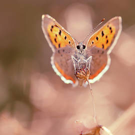 Butterfly Beauty - Roeselien Raimond