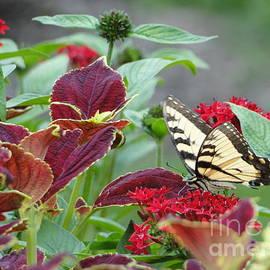 Butterfly Blessing The Gardens by Barbie Corbett-Newmin
