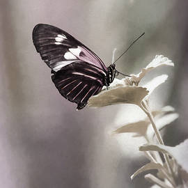 Butterfly Bliss by Sharon McConnell