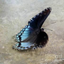 Butterfly Blue On Groovy 3  by Anita Faye