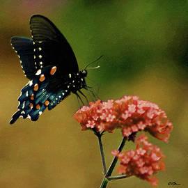 Butterfly Breakfast by Claudia O'Brien