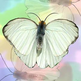 Rosalie Scanlon - Butterfly, Butterfly