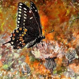 Barbara Chichester - Butterfly Energy