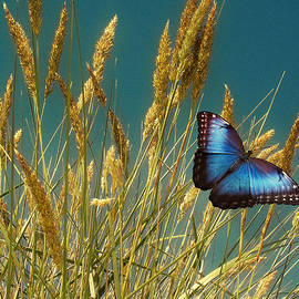 David Dehner - Butterfly Fields of Grain Blue