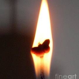 Butterfly Flame Close Up by Karen Jane Jones